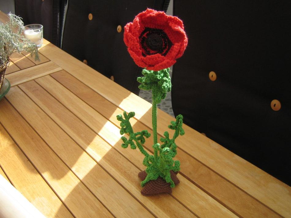 Hæklet Fransk anemone